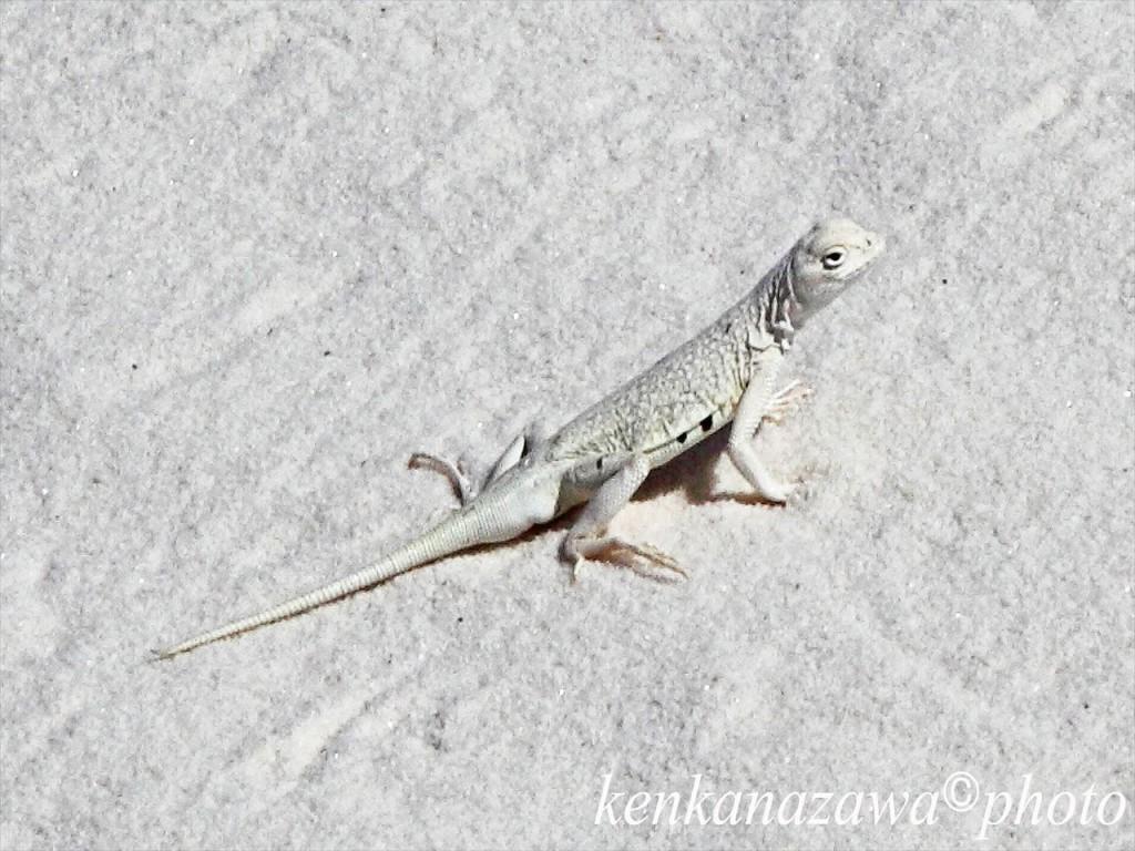 ホワイト・サンズ ニューメキシコ州
