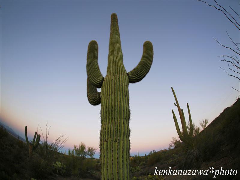 サワロ国立公園 アリゾナ州