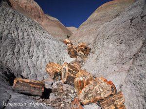 化石の森、ペトロファードフォーレースト