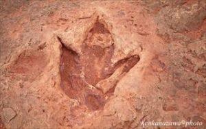 恐竜の足跡 アリゾナ州